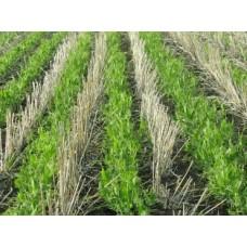 Гумат калію в технології вирощування сільгоспкультур