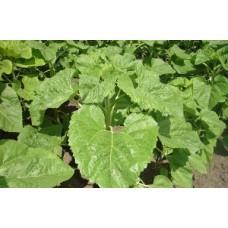Рекомендації щодо застосування гумату калію торф'яного рідкого в овочевих культурах та картоплі