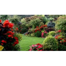 Чим удобрювати квіти і декоративні рослини?