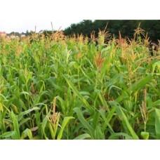 Особливості застосування гумату калію для позакореневого підживлення рослин