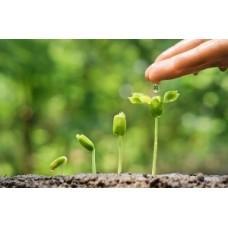 Гумати в рослинництві
