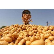 Вплив гумату калію на овочеві культури і картоплю