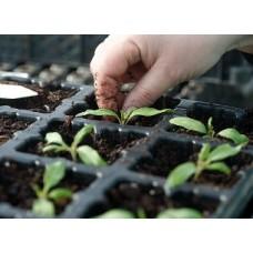 Как вырастить крепкую рассаду?