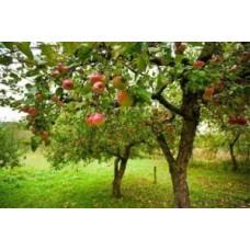 Humat potasowy – skuteczny nawóz do drzew owocowych