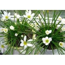 Стимулятори росту для кімнатних рослин - гумат калію