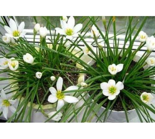 Стимуляторы роста для комнатных растений - гумат калия