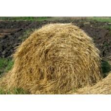 Деструктор стерні: нове слово в підживлюючій обробці ґрунту