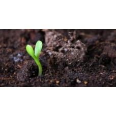 Вплив гуматів на фізичні властивості ґрунтів
