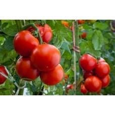 Як правильно і навіщо використовувати гумат калію для томатів
