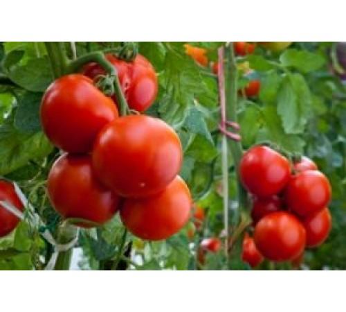 Как правильно и зачем использовать гумат калия для томатов