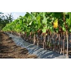 Як правильно і навіщо використовувати гумат калію для винограду