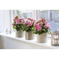 Гумат калію - краще натуральне добриво для декоративних рослин!