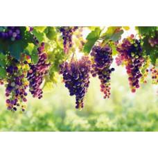 Рекомендації щодо застосування гумату калію торф'яного рідкого для плодово-ягідних культур та винограду