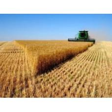 Гумат калію: зернові культури